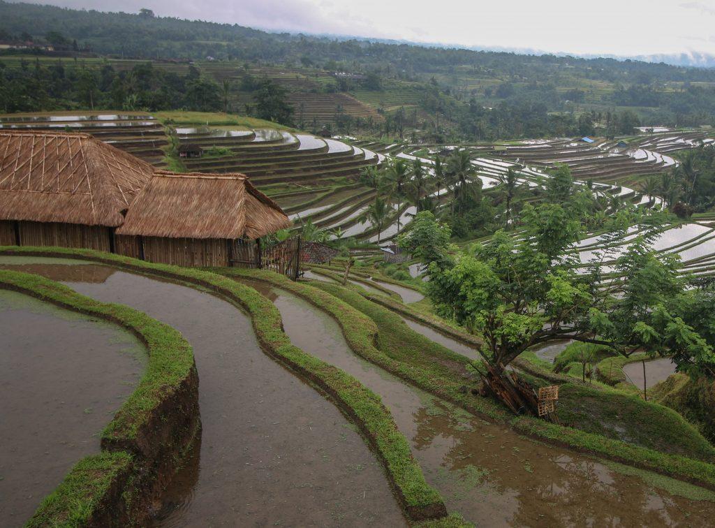 arrozales de jatiluwih bali indonesia