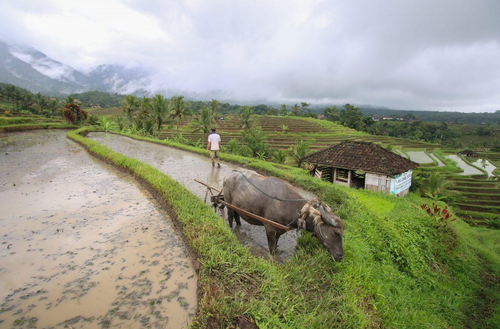 Rice terrace campos de arroz jatiluwih bali indonesia
